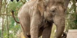 Olifant Dumbo gestorven in Planckendael