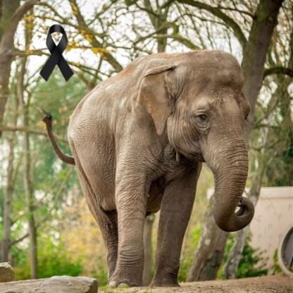 Overleden Dumbo naar UGent voor wetenschappelijk onderzoek