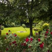 Je tuin als insectenparadijs: wat moet dat kosten?