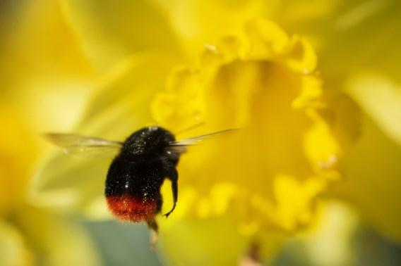 Meer dan veertig Belgische organisaties verenigen zich voor de biodiversiteit