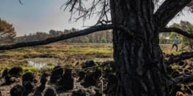 'Ongerepte natuur komt in Vlaanderen niet meer terug'