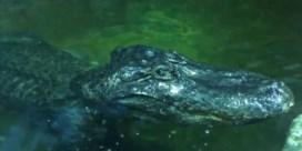 'Alligator van Hitler' gestorven in Moskou