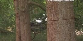 117 bomen beschadigd met kettingzaag
