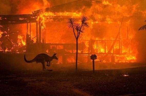 Rook bosbranden Australië kostte honderden het leven