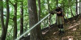 Opnieuw bosbrand in het Zoniënwoud