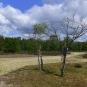 Vlaanderen overweegt watertarieven aan droogte aan te passen
