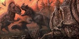 Dino's lustten elkaar rauw