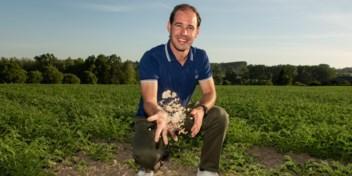 Binnenkort in uw winkel: kikkererwten uit de Vlaamse klei