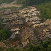 Ontbossing met 150 procent toegenomen tijdens coronacrisis