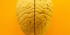 Gentse wetenschappers ontdekken gespiegelde hersenen