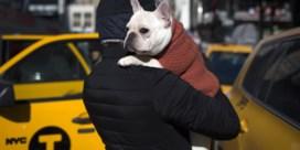 38 puppy's dood aangetroffen op vliegtuig in Canada