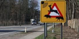 Door wilddetectie van 19 ongevallen naar één met overstekend wild