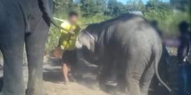 Undercoverbeelden tonen hoe olifanten worden mishandeld bij training voor ritjes