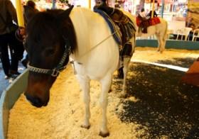 Geen pony's of paarden meer op de kermissen