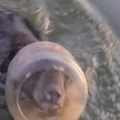 Familie redt beer uit benarde situatie