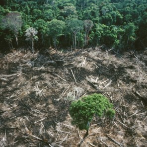 Meer branden in Braziliaans Amazonewoud dan vorig jaar