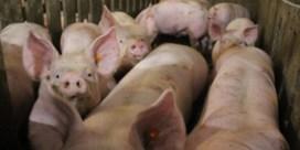 'We moeten varkensgriepvirussen beter opvolgen'