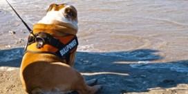 Eerste bewaakt Vlaams hondenstrand opent in Middelkerke