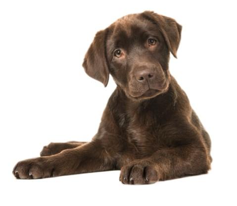 Eén hondenjaar is dan toch niet gelijk aan zeven mensenjaren