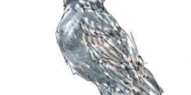 Vrolijke tuinvogels