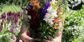 Een bloemenabonnement