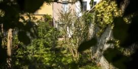 Tuinrangers lokken vogels en vlinders naar uw tuin