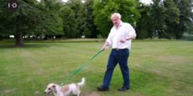 Johnson heeft de perfecte reden om met je hond te gaan wandelen