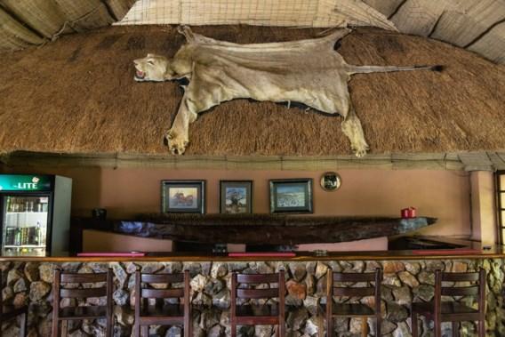 Socialisten willen verbod op import koppen van leeuwen en ijsberen