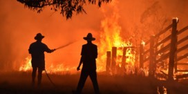 Zeker 3 miljard dieren dood of gevlucht door bosbranden Australië