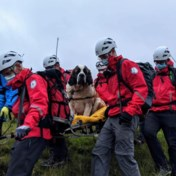 Reddingshond moet zelf van berg gered worden