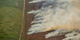 Aantal branden in Amazonewoud steeg in juli met twintig procent