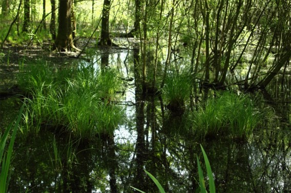 Brand vernielt stuk bos in natuurgebied Langdonken