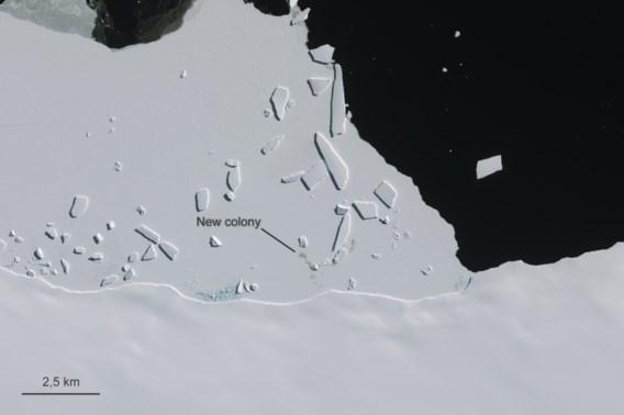 Satellietbeelden onthullen nieuwe pinguïnkolonies op Antarctica