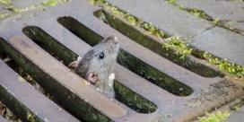 Verwoeste natuur vergroot kans op dodelijke ziekten van wilde dieren