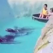 Belgisch familiepark onder vuur voor beelden van zeeleeuw die bootje voorttrekt