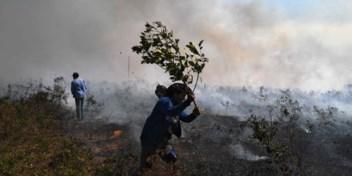 Al meer brandhaarden in Amazone dan vorig jaar