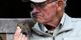 Hoe komt het dat er zoveel meer eekhoorns zijn in Londen dan in België?