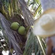 'Ook kokosolie is slecht voor de natuur'