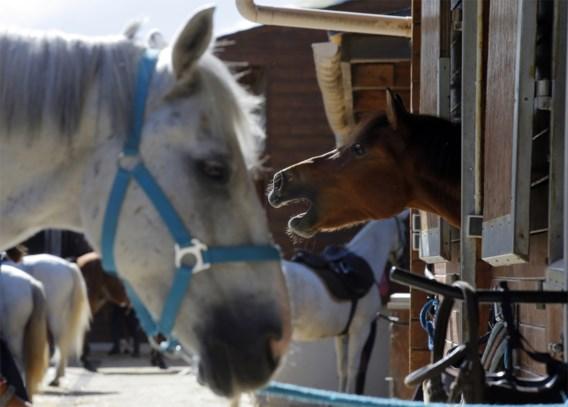 Dertig paarden ritueel verminkt in Frankrijk