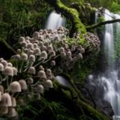 Australische fotowedstrijd bekroont Belgische natuurfotograaf