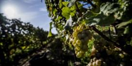 Belgische wijnproductie zakt met een kwart