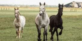 Man aangehouden in Frankrijk voor verminken paard
