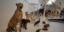 Ruim 850 opgezette dieren te bewonderen in expo 'Levende Planeet'