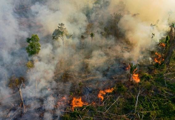 Regenwoud in Amazonegebied blijft branden