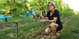Coronaregels dwingen wijnkasteel om er bouwvakkers te laten overnachten