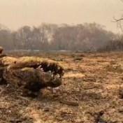 Eén van 's werelds grootste ecosystemen lijkt te verdwijnen, volgens Bolsonaro is er geen vuiltje aan de lucht