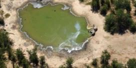 Massale olifantensterfte veroorzaakt door toxines in water, zegt Botswana