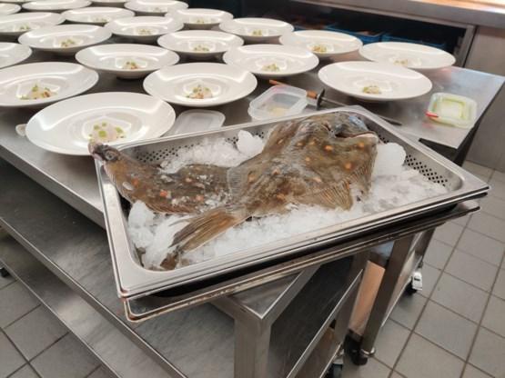 Pladijs is vis van het jaar