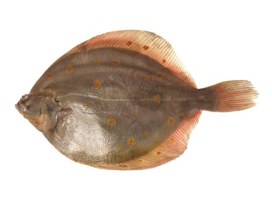 Pladijs, vis van het jaar, maar hoe maakt u hem klaar?