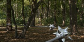 Drie knuppels in het bos